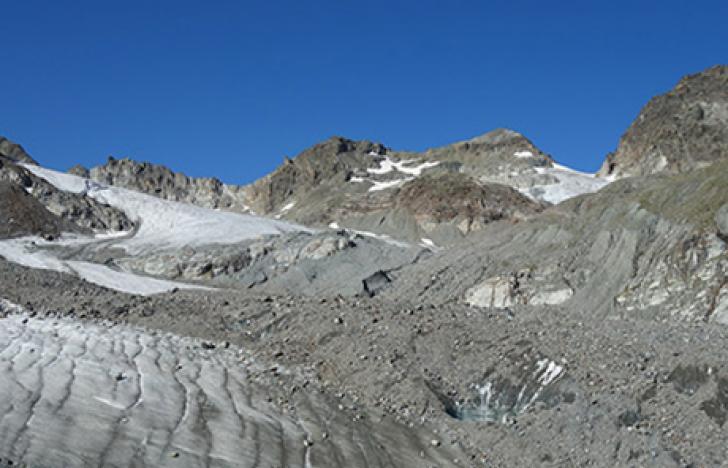 Pflanzen erobern ehemalige Gletscherflächen